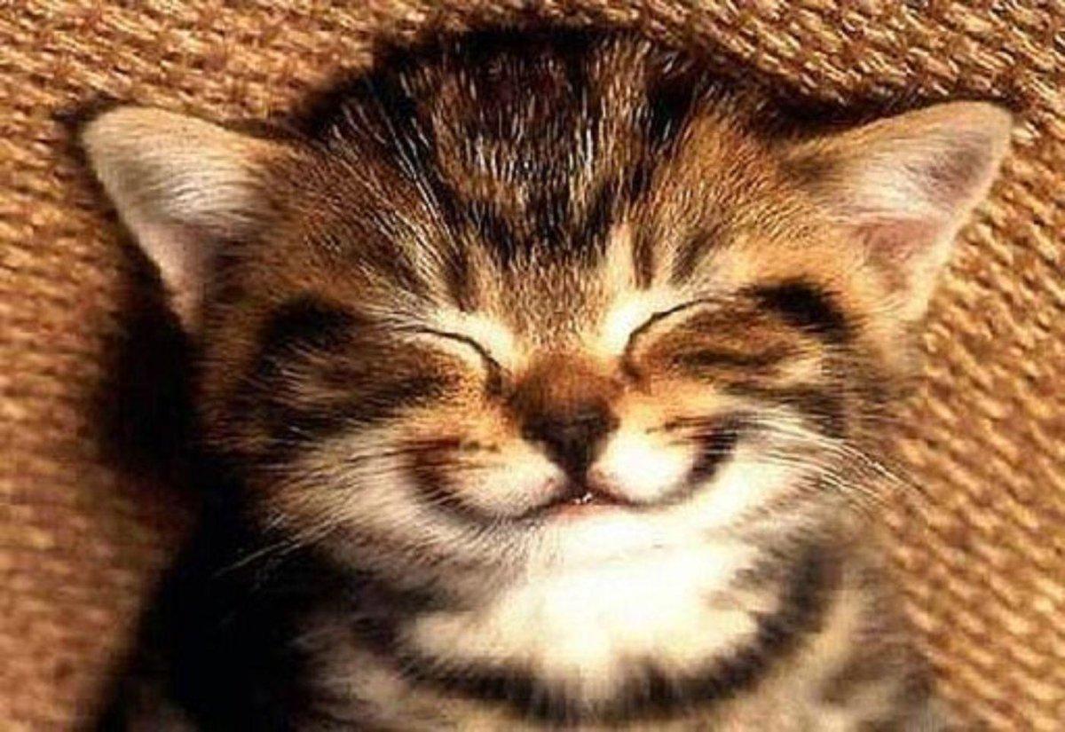 ¡Sonríe! Y tu entorno lo reflejará. La gente tiende a imitar las expresiones que ve alrededor http://t.co/0pCnwScPz3 http://t.co/iQJh5pID3n
