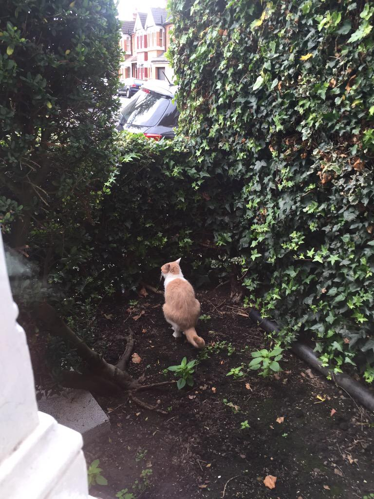 @thecatreviewer spied this stranger in my front garden this morning. 1/10 for audacity. http://t.co/qL0Qpr1H3q