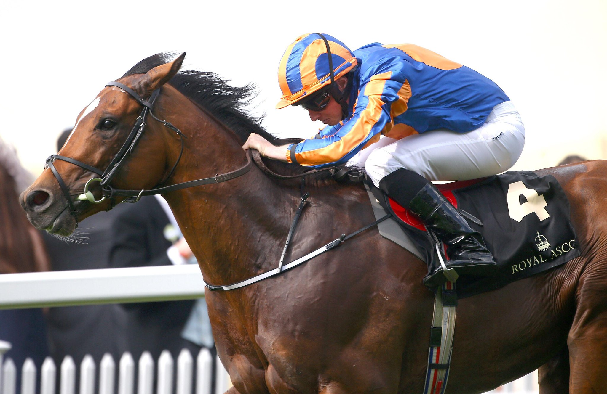 """Aidan O'Brien on Gleneagles: """"If he was going to go to the Classic then he had to run, we'll see how he is."""" #BC15 http://t.co/qnGdEifBSs"""