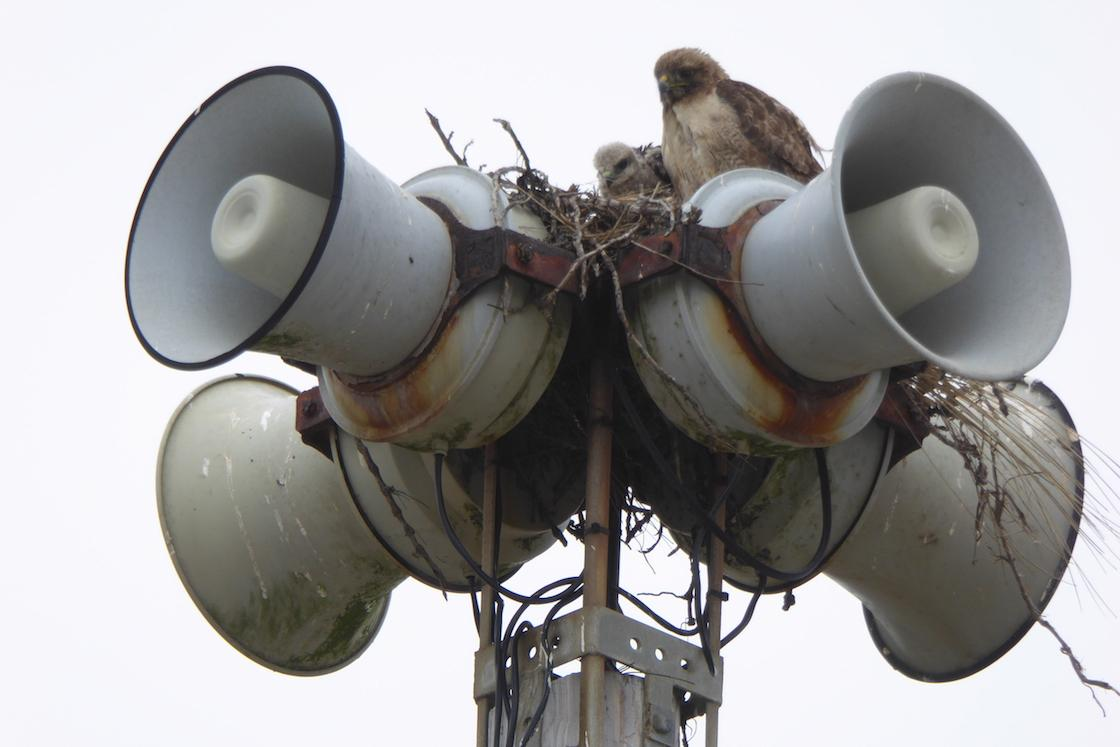 Of the 109 sirens in San Francisco's Outdoor Public Warning System, 108 work; 1 is a nest: http://t.co/jFusKppxE9 http://t.co/Xh5DntmziR