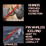 .@sjalfstaedis #Icelands #FinWhale hunt like Rhino poaching. Is this the image you want for #Iceland? #OpWhales https://t.co/DSA7QpGDpy