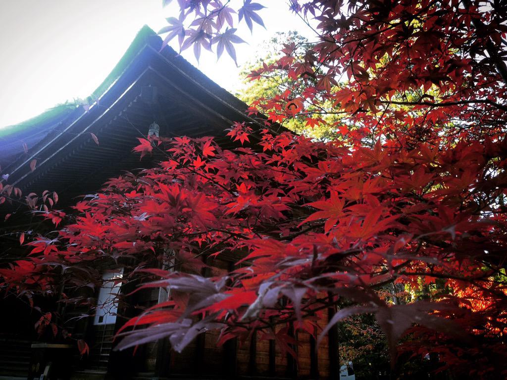 Y el arce japonés se tiñó de rojo. Ahora sí, es otoño. #Japón https://t.co/SZ6d2dsten http://t.co/nparNARfXG