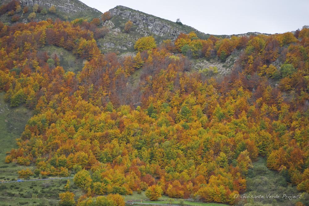 Paisajes de #Asturias A pie o por carretera, el #otoño en Somiedo, nos dejó una sinfonía de colores @TurismoAsturias http://t.co/Vu54eSBwTh