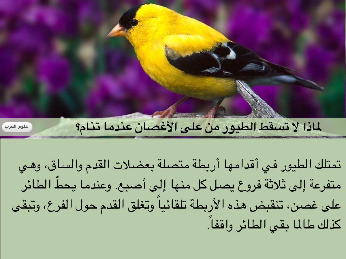 #هل_تعلم ؟ لماذا لا تسقط الطيور من على الأغصان عندما تنام؟ https://t.co/XX8inumtv0