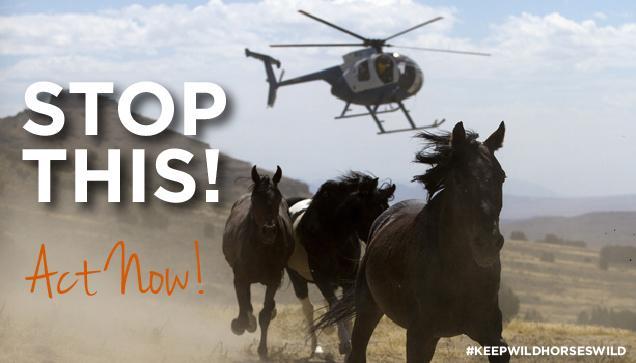 RT @FreeWildHorses: ACT NOW! Oppose the massive roundup of 1,500 #wildhorses! --> https://t.co/ZFQIVMFUju https://t.co/Xwbxqvr7FL