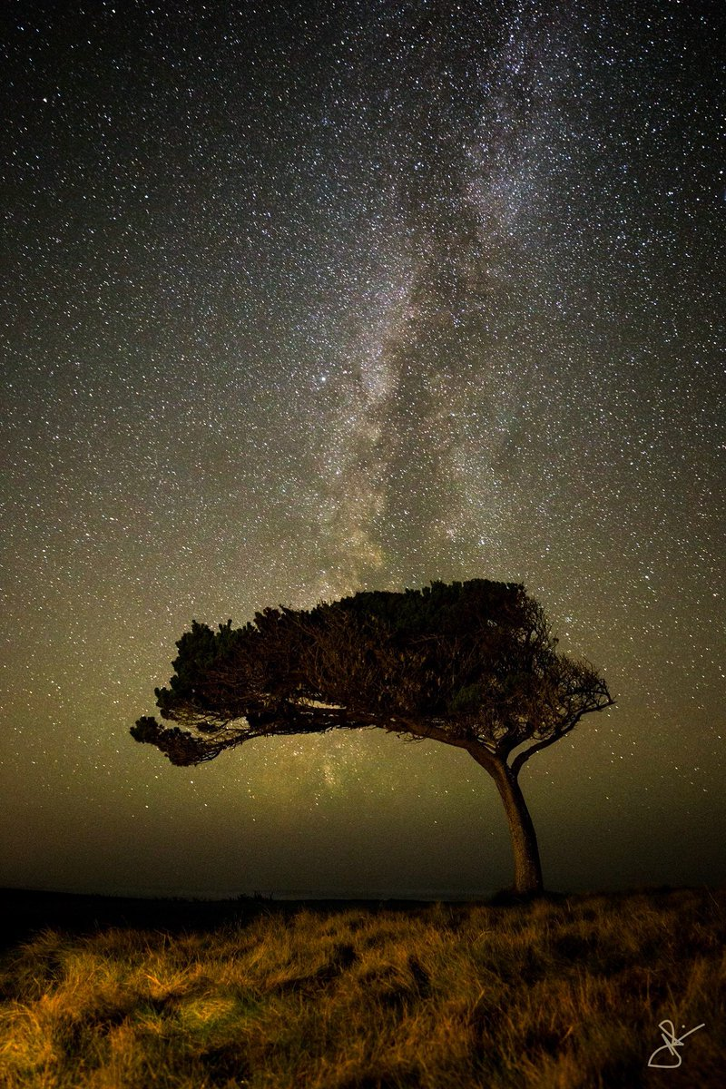Jim Placio took this stunning photo of the tree at #BandonDunes No. 17 with a night sky in the background #GuestPic https://t.co/BZfTiBmo4q