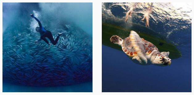 Our #MarinePhotobank now on #Instagram! Follow for inspiring, honest #photos of the #ocean. https://t.co/gYpVZiHado https://t.co/8LSqOxs9UA