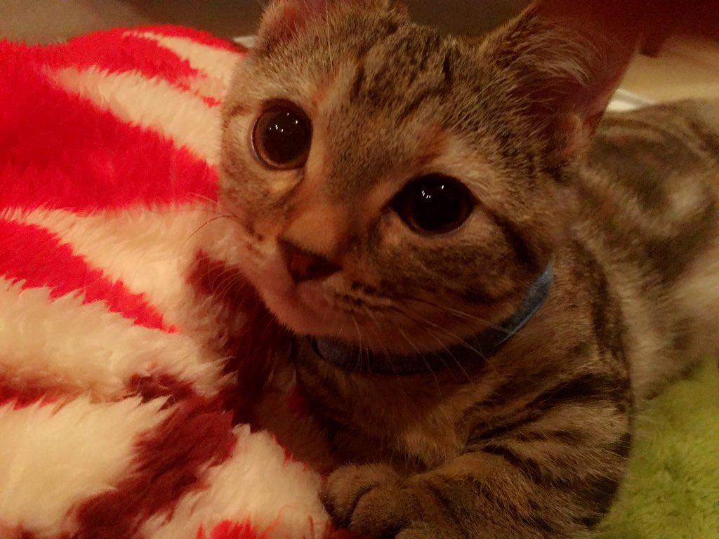 【指原】マンチ・カン太郎&ミヌエット五郎応援スレ★21【猫ーズ】©2ch.net->画像>374枚