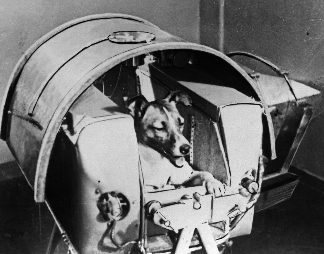 """Happy """"Laika Night""""! 3 Nov 1957 Лайка was 1st Earth creature to orbit our planet. Give your pet(s) a treat tonight! https://t.co/QQGzLCGxwN"""