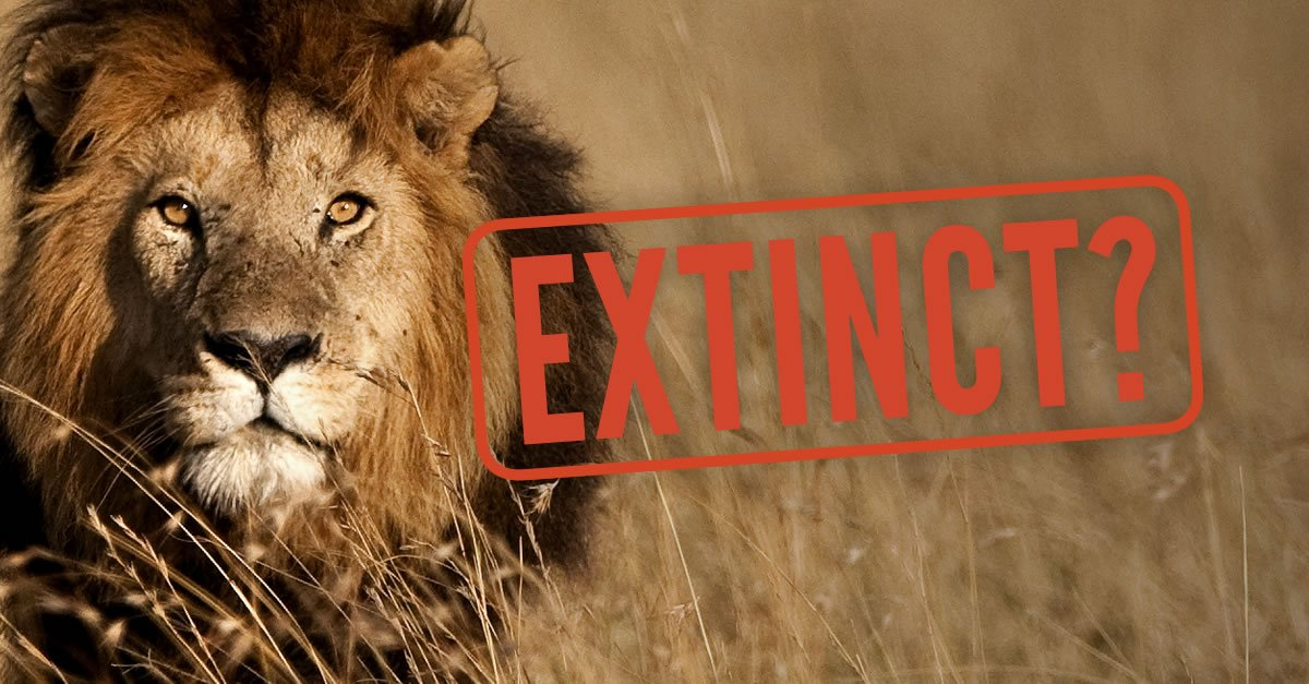 If we don't act now, Africa's #lion could go extinct by 2050—let's keep that from happening: https://t.co/6EKQg331F2 https://t.co/vGqMk7hiBX