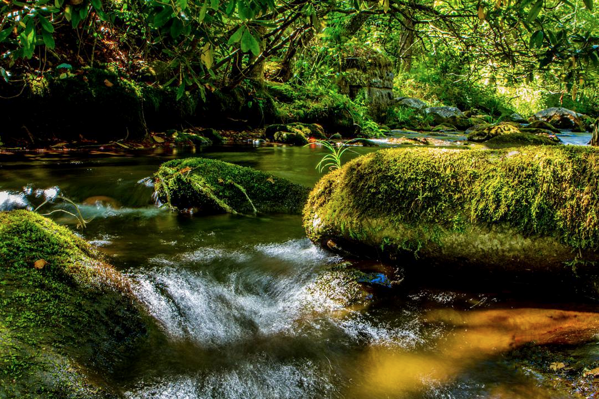 In some photos, @GreatSmokyNPS can look almost tropical.   IG