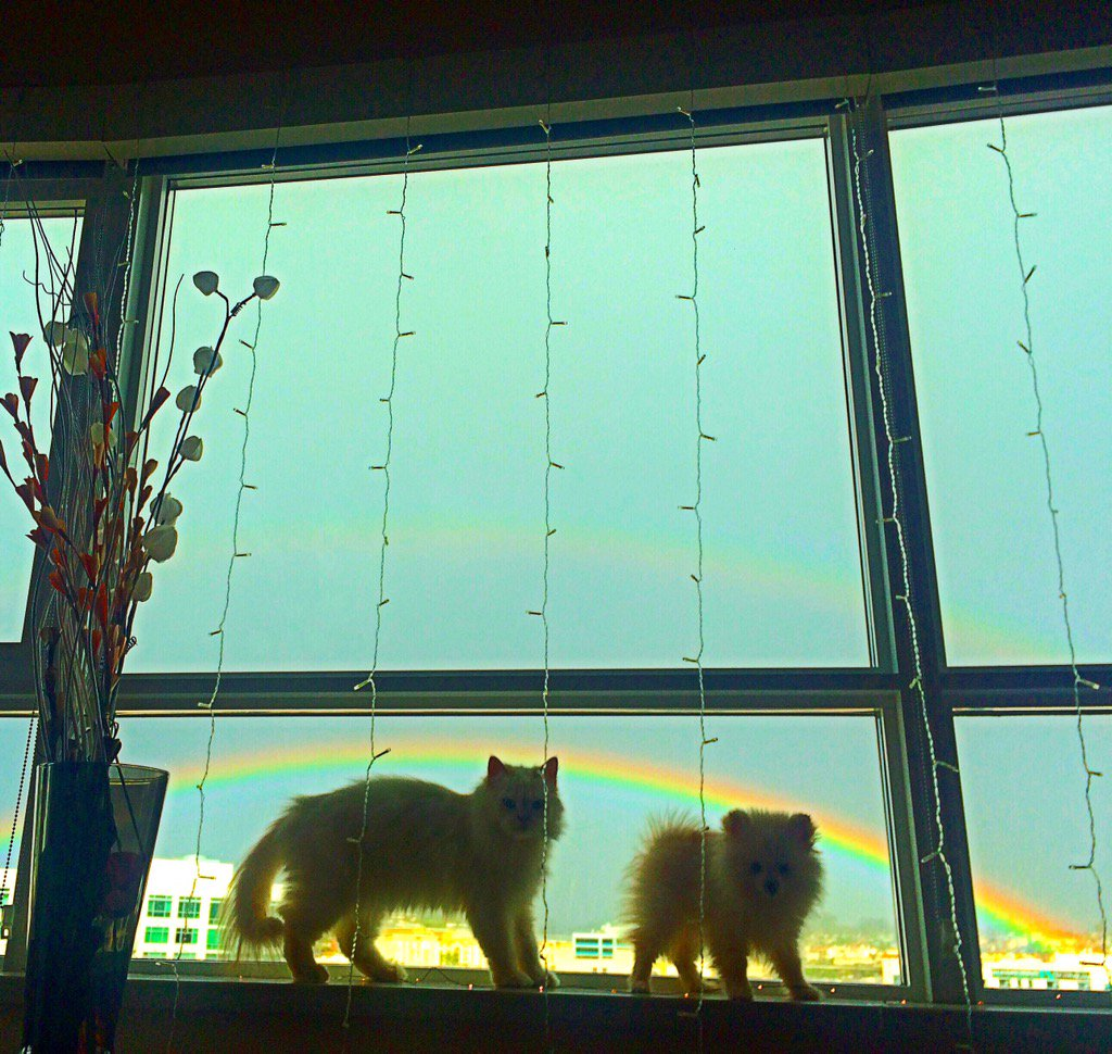 Got to share the rainbow with these fur balls ?? 0nv7LlqFO6