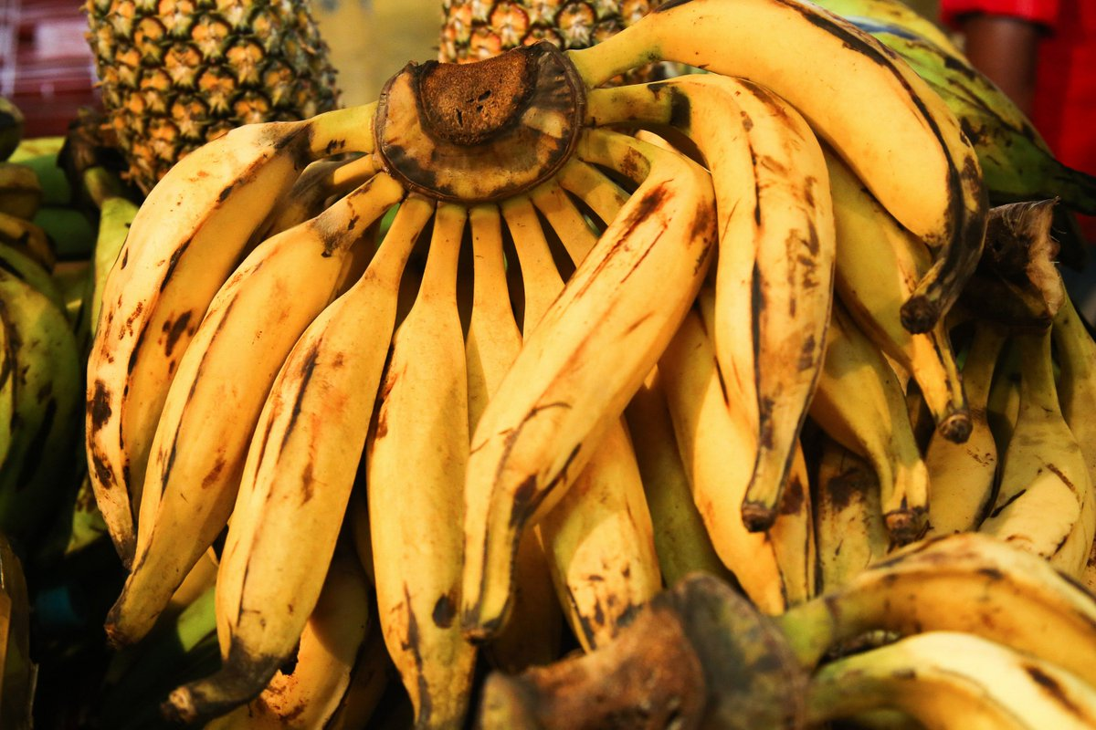 Dê uma banana para o agronegócio. Tenha em casa #ComidaSemVeneno. https://t.co/fKqO8nO98w