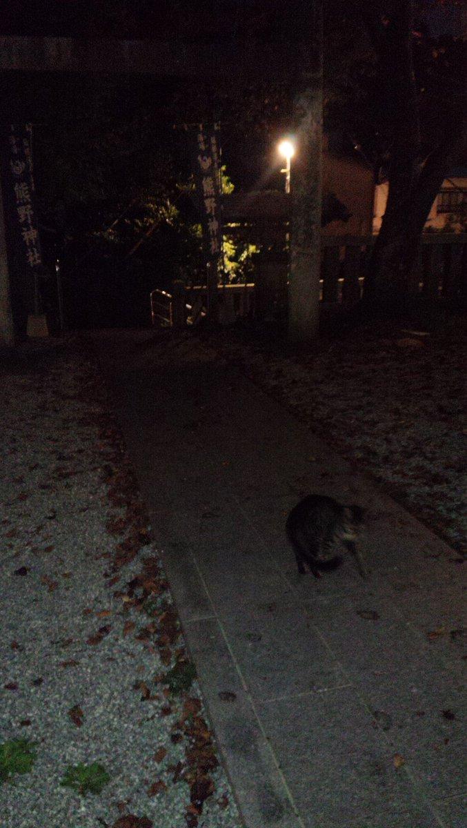 bot:箱根湯本 #熊野神社 にて温泉幼精 #ハコネちゃん の舞台です秋の葉の香り馴染ませ 毛づくろい猫も護りの 魂鎮め