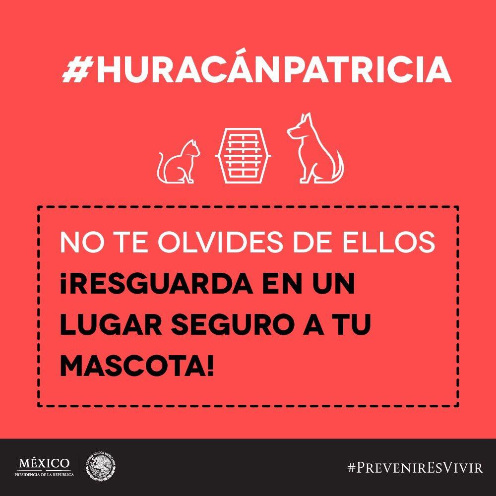 Los animalitos, no se olviden de ellos #HuracánPatricia > https://t.co/ngFOYZ3Qvu