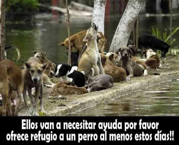 #AyudaEspecial por favor ayudemos a los perritos de la calle #HuracánPatricia https://t.co/jM8uPYovbA