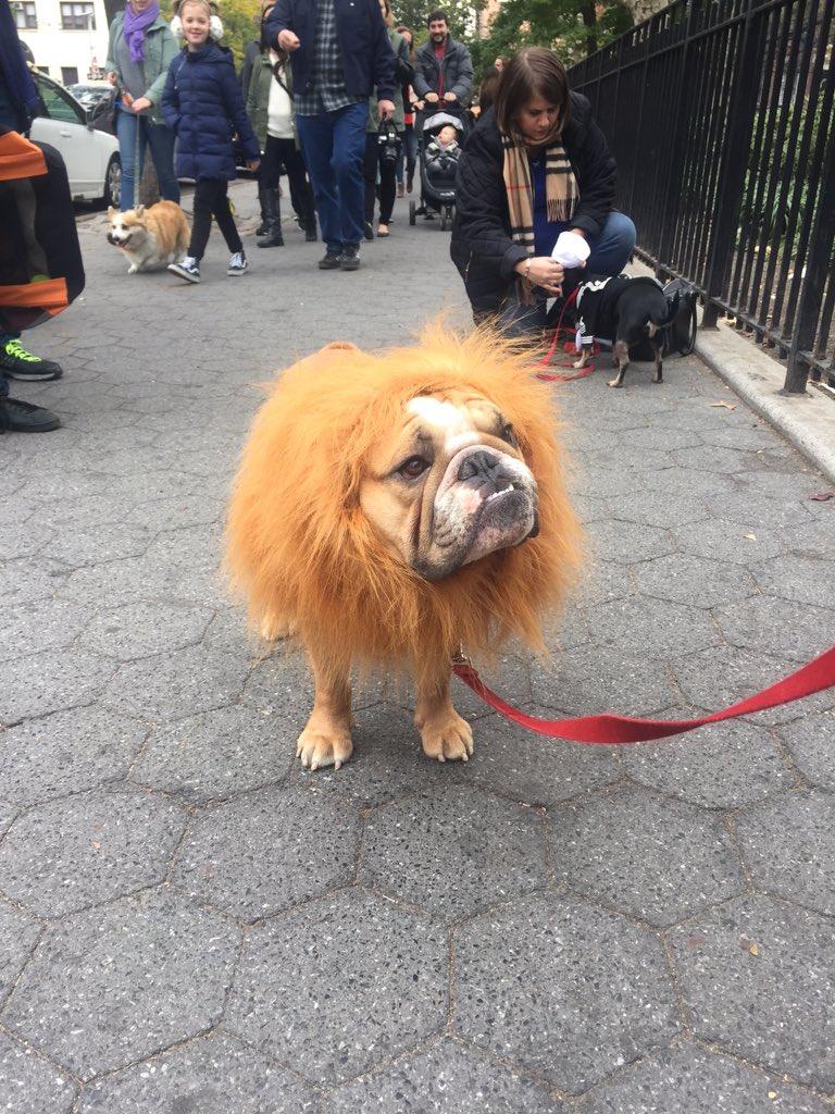 We're at the #TompkinsSquarePark #Howloween parade & it's freakin' adorable https://t.co/Fi4QhrC2Ek