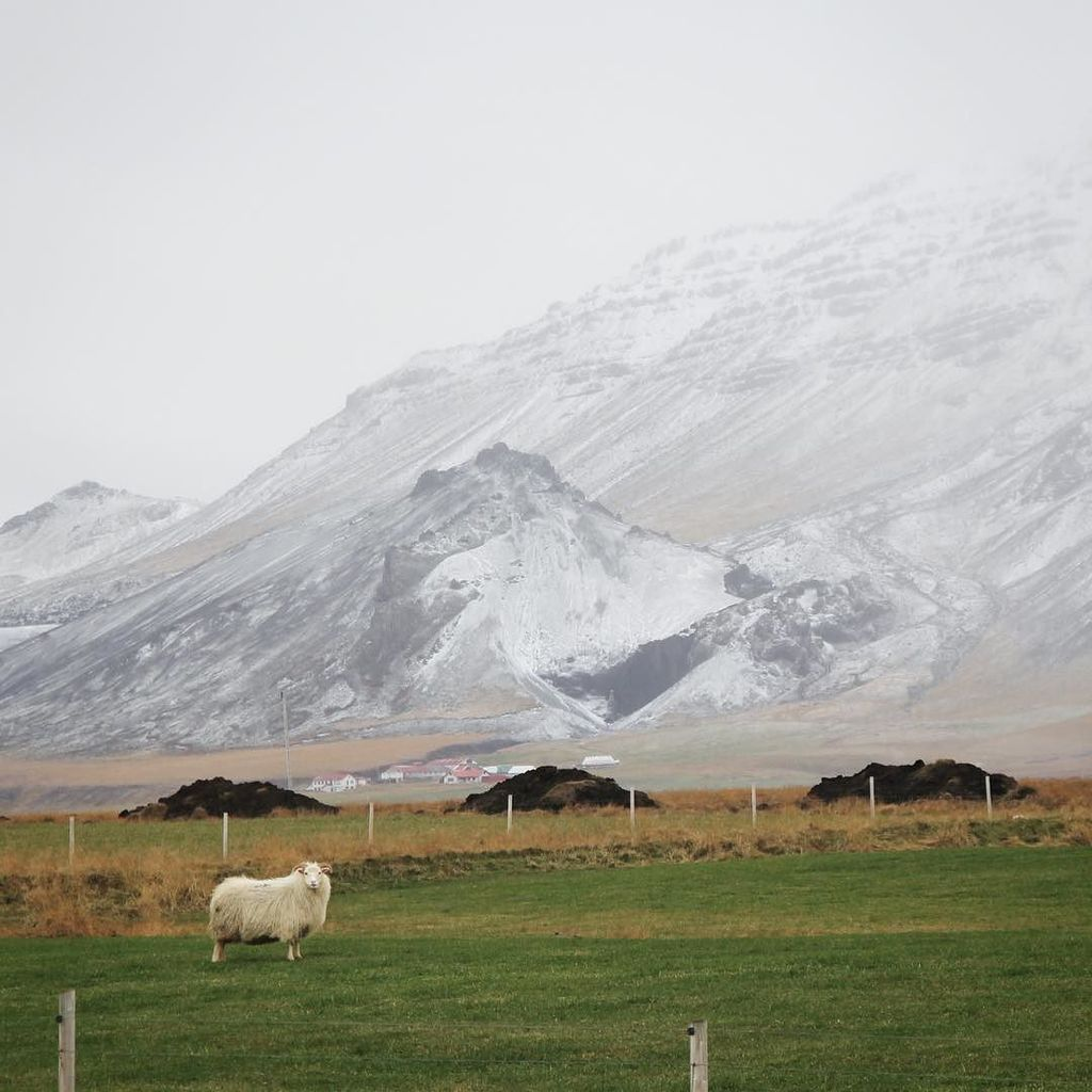 how ewe doin'? #niceland https://t.co/Azjy9bZOPR https://t.co/3nfhofAkEB