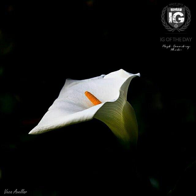#ig_bahrain_ presenting photo of the day #photographer #vecaavellar #bahrain #igworldclub #follow #instagram https://t.co/YOxMtpM3JP