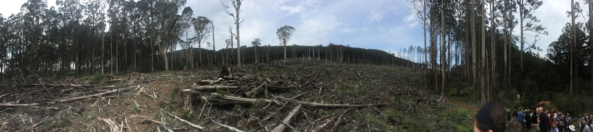 "Went to Toolangi State Forest today. ""World's best practice"" according to VicForests. Absolutely devastating! #GFNP https://t.co/eSuqWn8Nku"