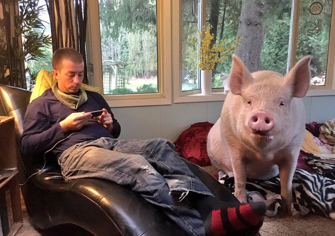 RT @EstherThePig: Gonna watch some Sunday morning cartoons while we wait for breakfast. https://t.co