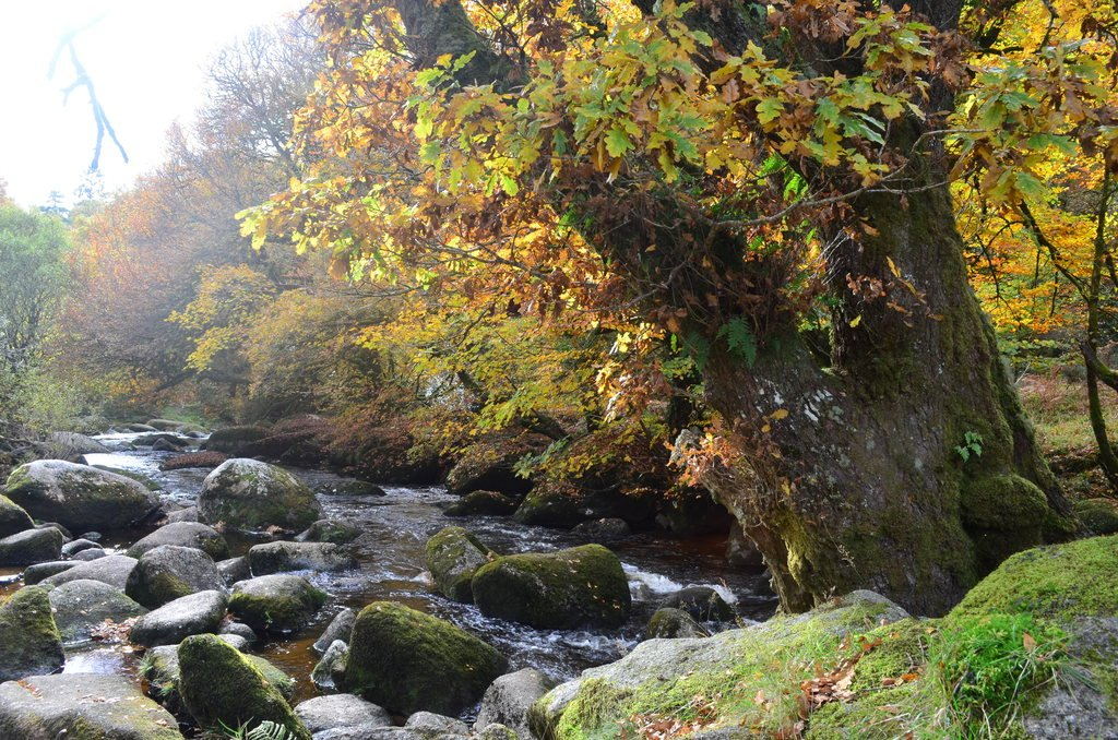 By the rushing-cold river Dart as the leaf-flames of autumn flicker up through October... https://t.co/amR84emSX4