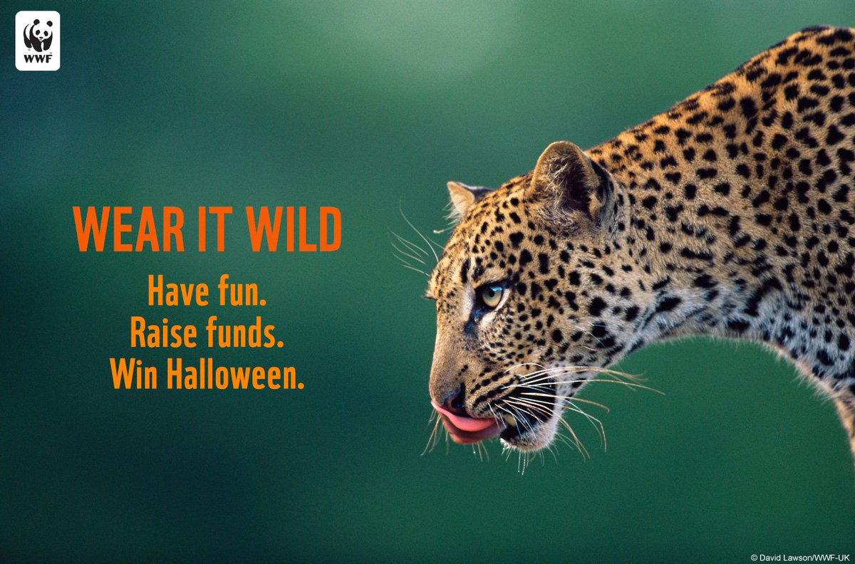 #WearItWild this Halloween + help raise funds for endangered species: https://t.co/0aLbh7SFSv via @world_wildlife https://t.co/2R9cKrRZCc