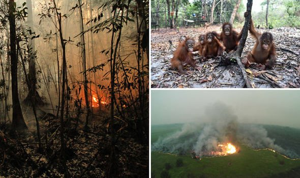 Burning in their home: 20,000 orangutans on verge of being WIPED OUT by raging forest fire https://t.co/PUs5QKT7yg https://t.co/tOLYqzjmPw