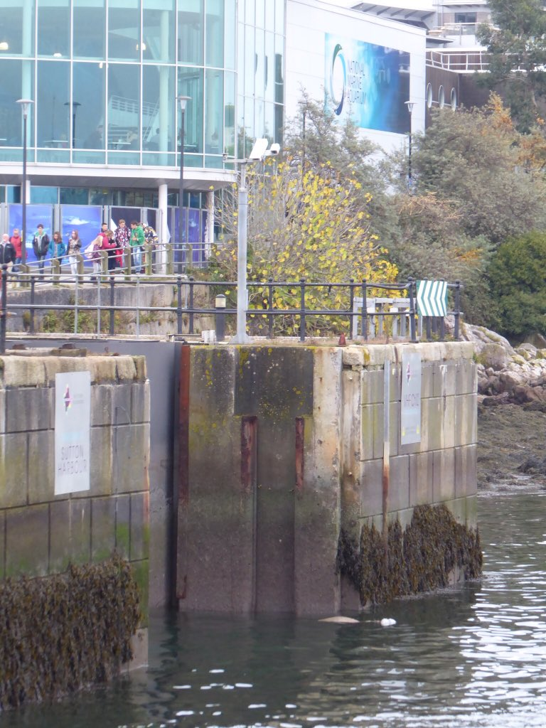 Great seeing the @PlymBarbican Seal outside @NMAPlymouth today... Not seen him for a while! #Plymouth https://t.co/r42gY1wZ3h