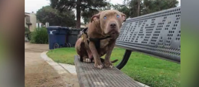 Blind dog left on a park bench learns what love feels like: https://t.co/urQcy8f5NL (by @SeanDowlingTV) https://t.co/BsRqC1QUbT