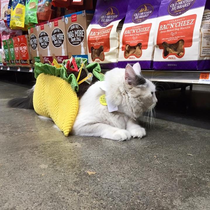 For #NationalCatDay we turned all our store partners into cats wearing taco costumes. #YoureWelcome #JK (Pic: Jason) https://t.co/CUtUrjaQe4