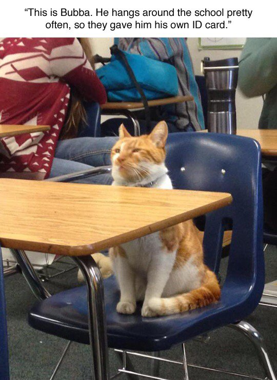 """""""this is bubba. he hangs around the school pretty often, so they give him his own id card"""""""