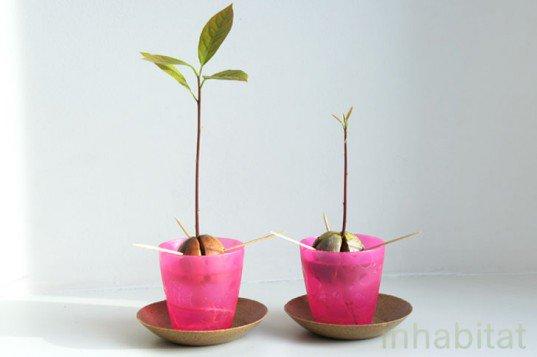 DIY: cómo dar vida a un hueso de aguacate para que crezca un árbol
