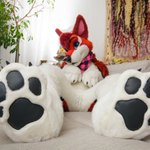 Image of footpawfriday from Twitter