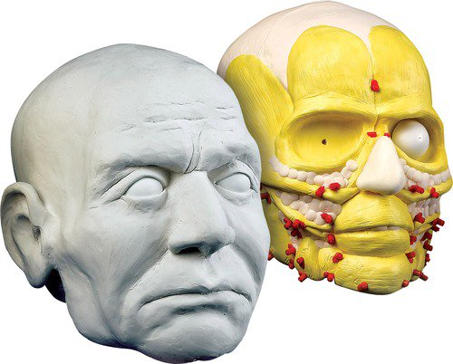 Csi forensic facial reconstruction