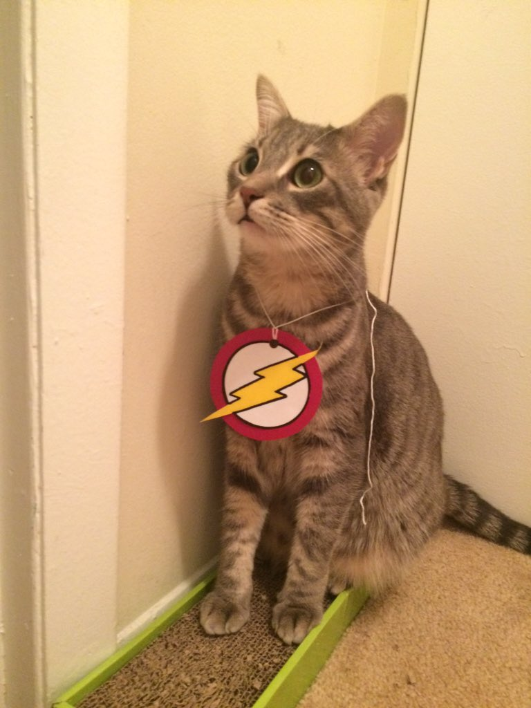 """""""My name is Dillon, and I am the fastest cat alive. I am #TheFlash!"""" @GBerlanti @grantgust @CW_TheFlash https://t.co/9umA9l5BLQ"""