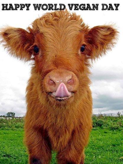 Happy World Vegan Day! #WorldVeganDay #GoVegan https://t.co/yuzvsBCVs0