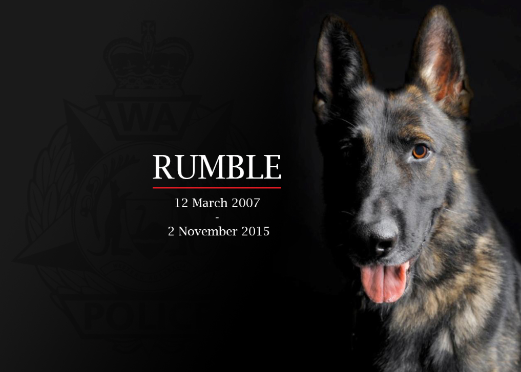 It is with great sadness that 'Our Boy' Rumble has succumbed to his illness. https://t.co/22iH6RMGb5 https://t.co/eN8KvxckPU