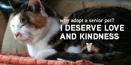 November is Adopt a Senior Pet Month. There are tons of great reasons to adopt a senior pet. https://t.co/fzazgDiH2B