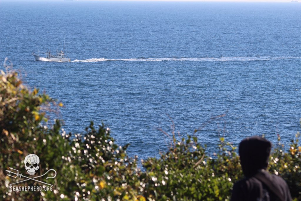 RT @CoveGuardians: 0955am: All in, all empty. Freedom in the oceans for another day!!! BLUE COVE DAY! #tweet4taiji https://t.co/BERqFcjAa6