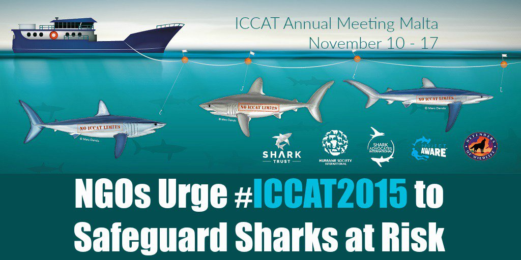 Hot #shark topics at #ICCAT2015 include #finsattached & #catchlimits #NoLimitsNoFuture Read: https://t.co/4yb13st3E9 https://t.co/QAsyfLBAxe