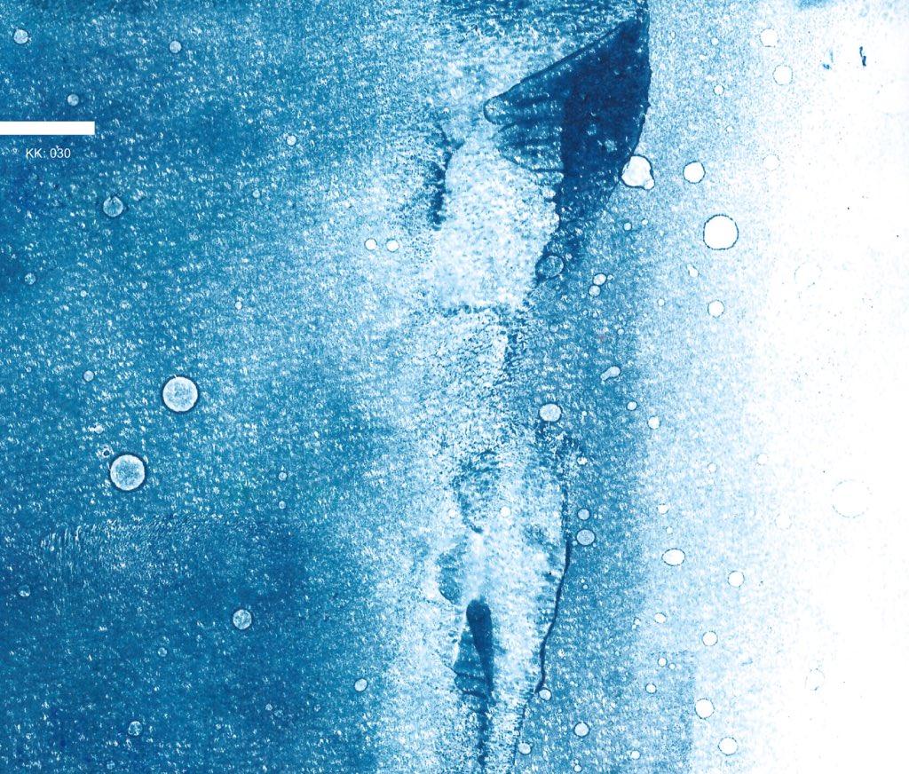 12月24日に初のソロ作品「水のかたち」をSPEKKからリリースします! 5年間コツコツと録り貯めてきた、全て自然の中での1発録音です。 是非聴いて下さい!! 宜しくお願いします!!! https://t.co/fhIe8Re3Hb https://t.co/QA8gfX6i0q
