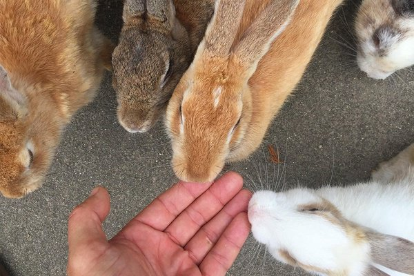 Japan's Rabbit Island Is the Cutest Place on Earth https://t.co/ncEDdu3IzA via @FathomWayToGo #cute #travel #rtw https://t.co/zrZEGUDEdL