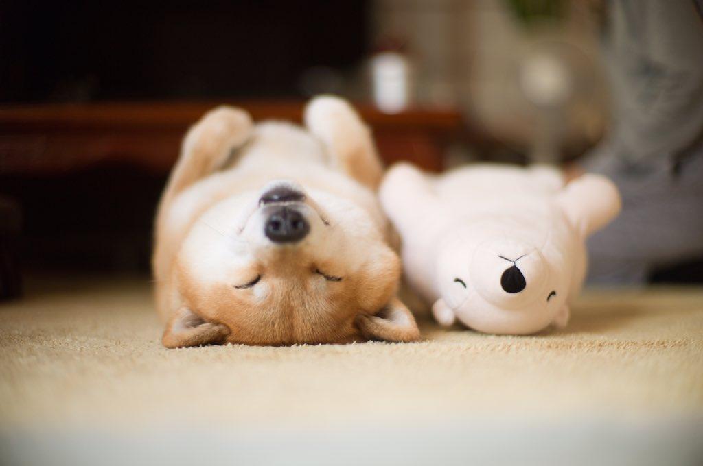 カレンダー カレンダー 2015年度 : 消灯! |marutaro(柴犬まる公式 ...