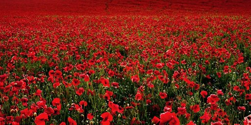 To those that courageously gave their lives and those who bravely fight today. Thank you. #RemembranceSunday https://t.co/ranxs9v937