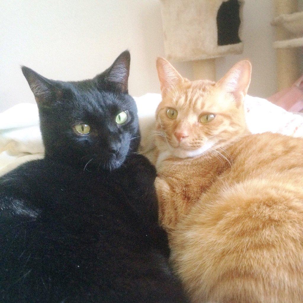 里親募集を見た瞬間に「あんこときなこ!」と叫んですぐに連絡した。喧嘩もするけどずっと仲良しの2匹。 #猫に名前を付けた日の事を話そうよ https://t.co/J5W11r703A