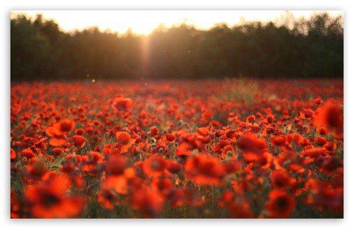 We shall remember them. #Remembrance @PoppyLegion https://t.co/Kkv2RFw6dN