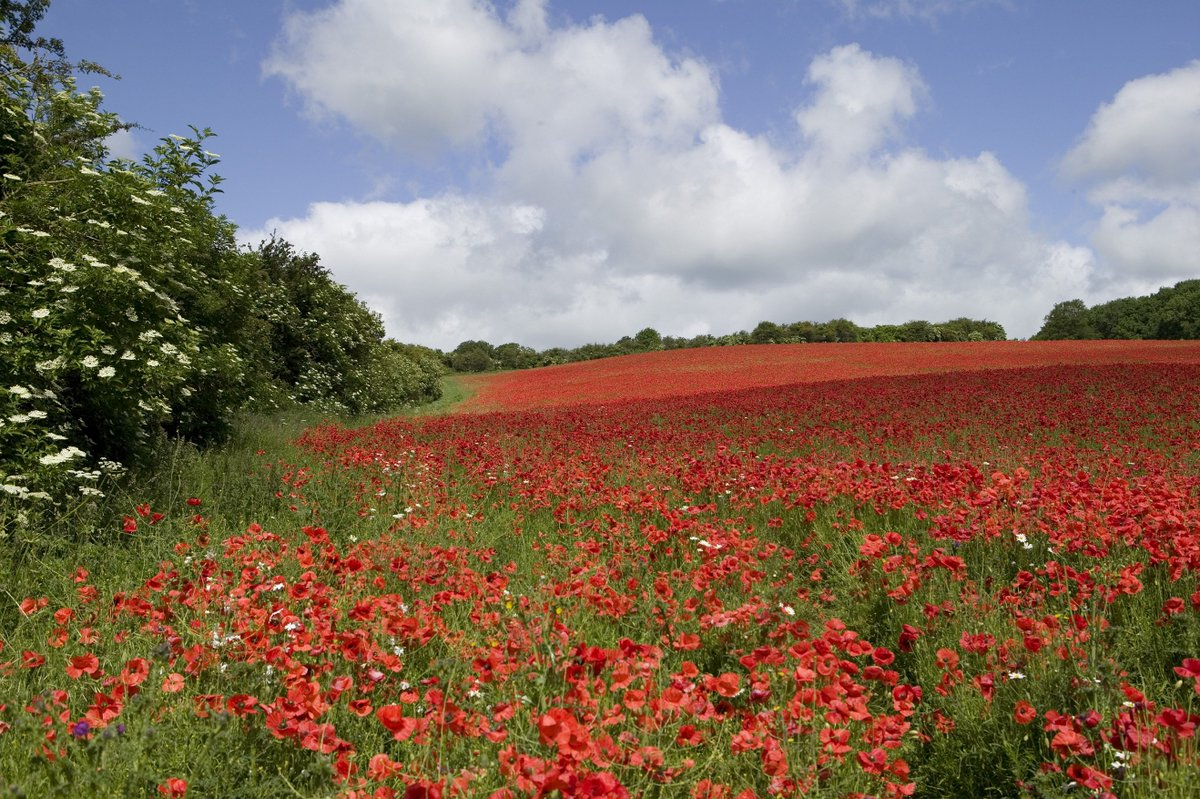 'At the going down of the sun and in the morning, We will remember them' #RemembranceSunday #PoppyAppeal https://t.co/igiq4vynNV