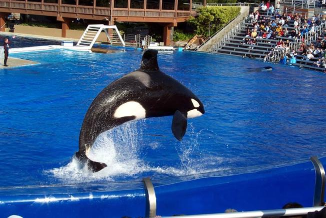 JUST IN: @SeaWorld will be ending killer whale shows, according to report: https://t.co/Az3FHGNY88 https://t.co/fb9hGQ2QyJ