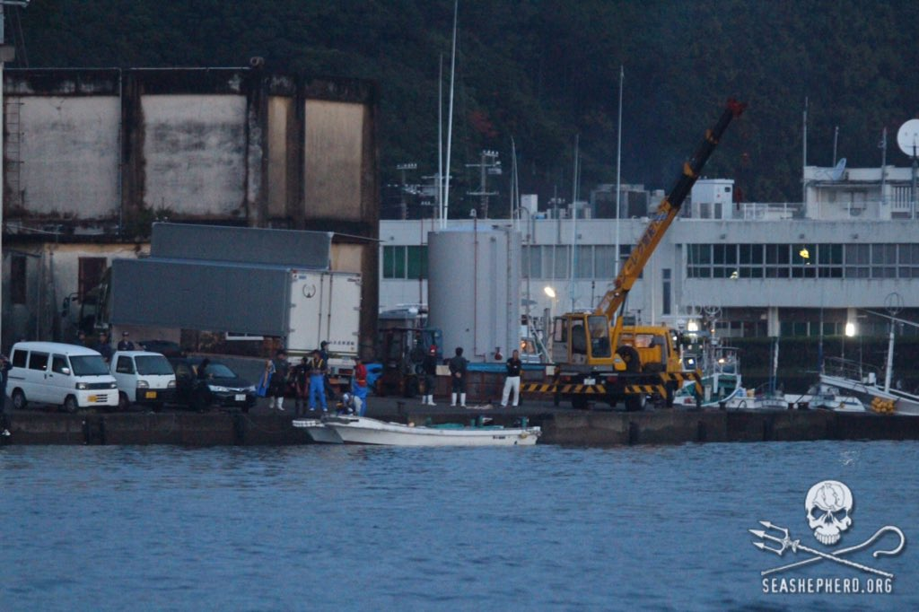 RT @CoveGuardians: 0604am: A transport is being prepared as the fleet leaves the harbor. #tweet4taiji https://t.co/ZyI9fPXqGO